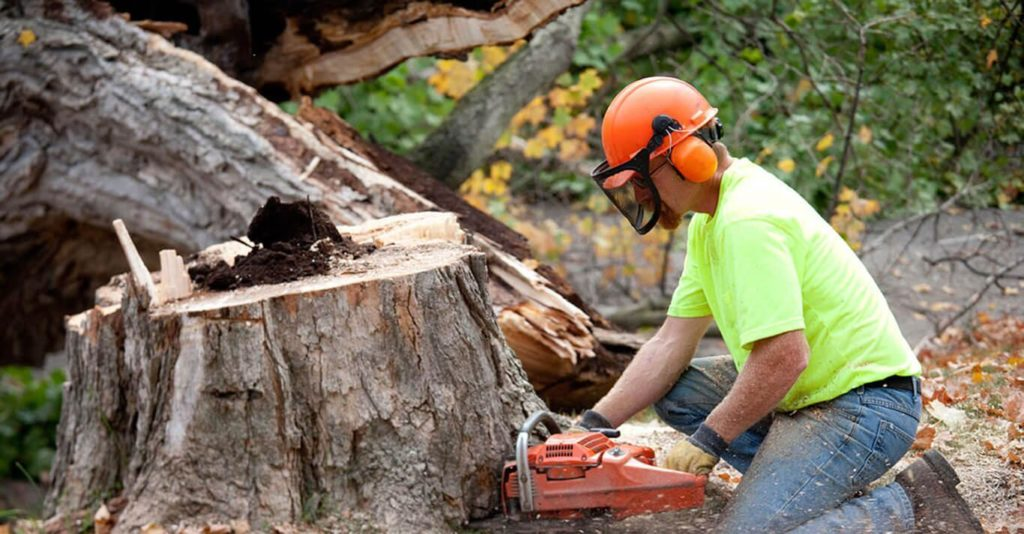 Aventura FL Tree Trimming and Stump Grinding Services Home Page-We Offer Tree Trimming Services, Tree Removal, Tree Pruning, Tree Cutting, Residential and Commercial Tree Trimming Services, Storm Damage, Emergency Tree Removal, Land Clearing, Tree Companies, Tree Care Service, Stump Grinding, and we're the Best Tree Trimming Company Near You Guaranteed!