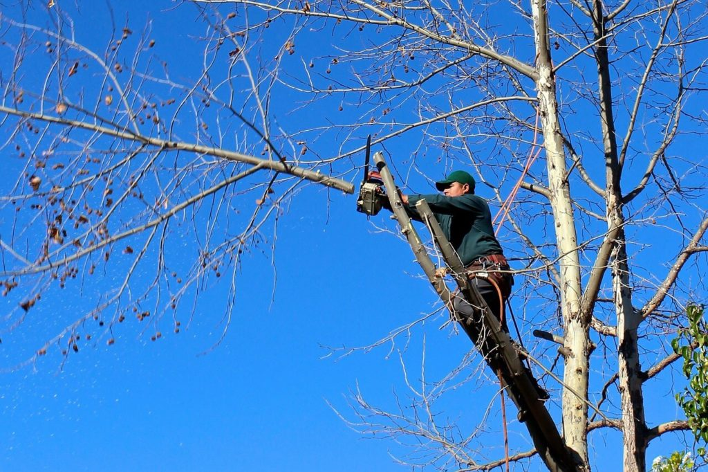 Contact Us-Aventura FL Tree Trimming and Stump Grinding Services-We Offer Tree Trimming Services, Tree Removal, Tree Pruning, Tree Cutting, Residential and Commercial Tree Trimming Services, Storm Damage, Emergency Tree Removal, Land Clearing, Tree Companies, Tree Care Service, Stump Grinding, and we're the Best Tree Trimming Company Near You Guaranteed!