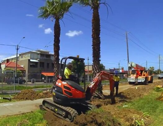 Palm Tree Removal-Aventura FL Tree Trimming and Stump Grinding Services-We Offer Tree Trimming Services, Tree Removal, Tree Pruning, Tree Cutting, Residential and Commercial Tree Trimming Services, Storm Damage, Emergency Tree Removal, Land Clearing, Tree Companies, Tree Care Service, Stump Grinding, and we're the Best Tree Trimming Company Near You Guaranteed!