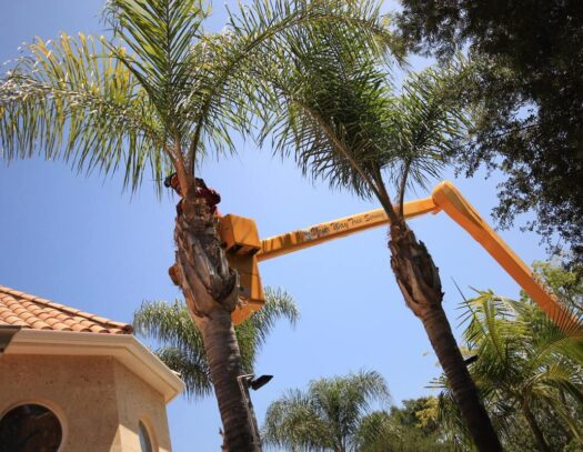 Palm Tree Trimming-Aventura FL Tree Trimming and Stump Grinding Services-We Offer Tree Trimming Services, Tree Removal, Tree Pruning, Tree Cutting, Residential and Commercial Tree Trimming Services, Storm Damage, Emergency Tree Removal, Land Clearing, Tree Companies, Tree Care Service, Stump Grinding, and we're the Best Tree Trimming Company Near You Guaranteed!