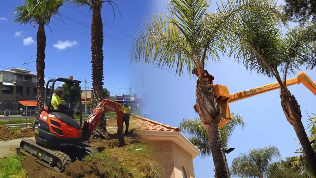 Palm tree trimming & palm tree removal-Aventura FL Tree Trimming and Stump Grinding Services-We Offer Tree Trimming Services, Tree Removal, Tree Pruning, Tree Cutting, Residential and Commercial Tree Trimming Services, Storm Damage, Emergency Tree Removal, Land Clearing, Tree Companies, Tree Care Service, Stump Grinding, and we're the Best Tree Trimming Company Near You Guaranteed!
