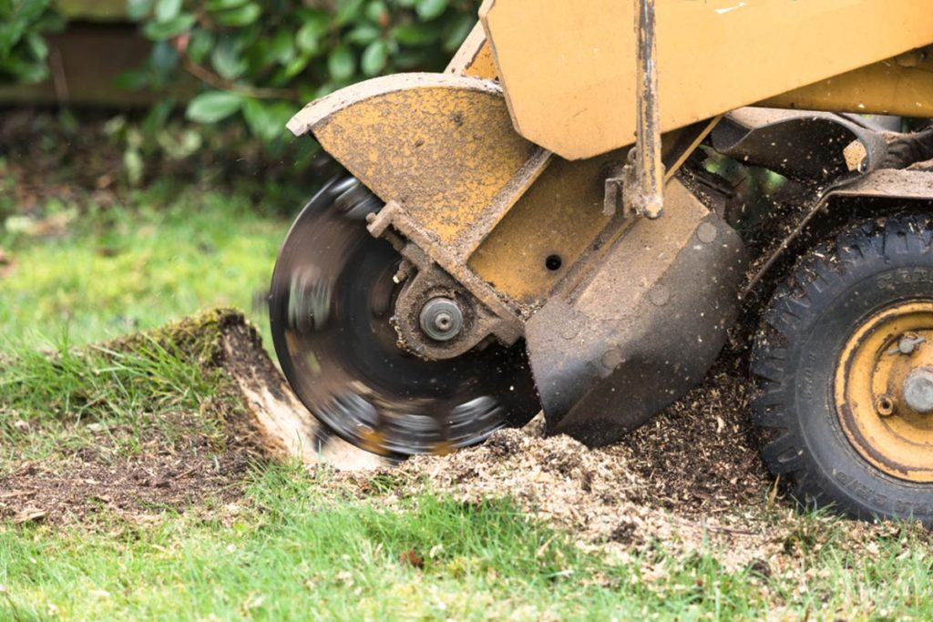 Stump Grinding-Aventura FL Tree Trimming and Stump Grinding Services-We Offer Tree Trimming Services, Tree Removal, Tree Pruning, Tree Cutting, Residential and Commercial Tree Trimming Services, Storm Damage, Emergency Tree Removal, Land Clearing, Tree Companies, Tree Care Service, Stump Grinding, and we're the Best Tree Trimming Company Near You Guaranteed!