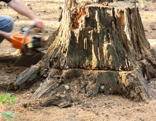 Stump Removal-Aventura FL Tree Trimming and Stump Grinding Services-We Offer Tree Trimming Services, Tree Removal, Tree Pruning, Tree Cutting, Residential and Commercial Tree Trimming Services, Storm Damage, Emergency Tree Removal, Land Clearing, Tree Companies, Tree Care Service, Stump Grinding, and we're the Best Tree Trimming Company Near You Guaranteed!