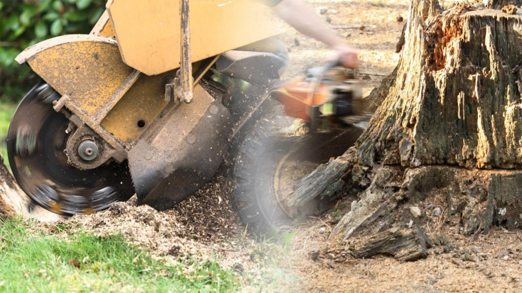Stump grinding & removal-Aventura FL Tree Trimming and Stump Grinding Services-We Offer Tree Trimming Services, Tree Removal, Tree Pruning, Tree Cutting, Residential and Commercial Tree Trimming Services, Storm Damage, Emergency Tree Removal, Land Clearing, Tree Companies, Tree Care Service, Stump Grinding, and we're the Best Tree Trimming Company Near You Guaranteed!