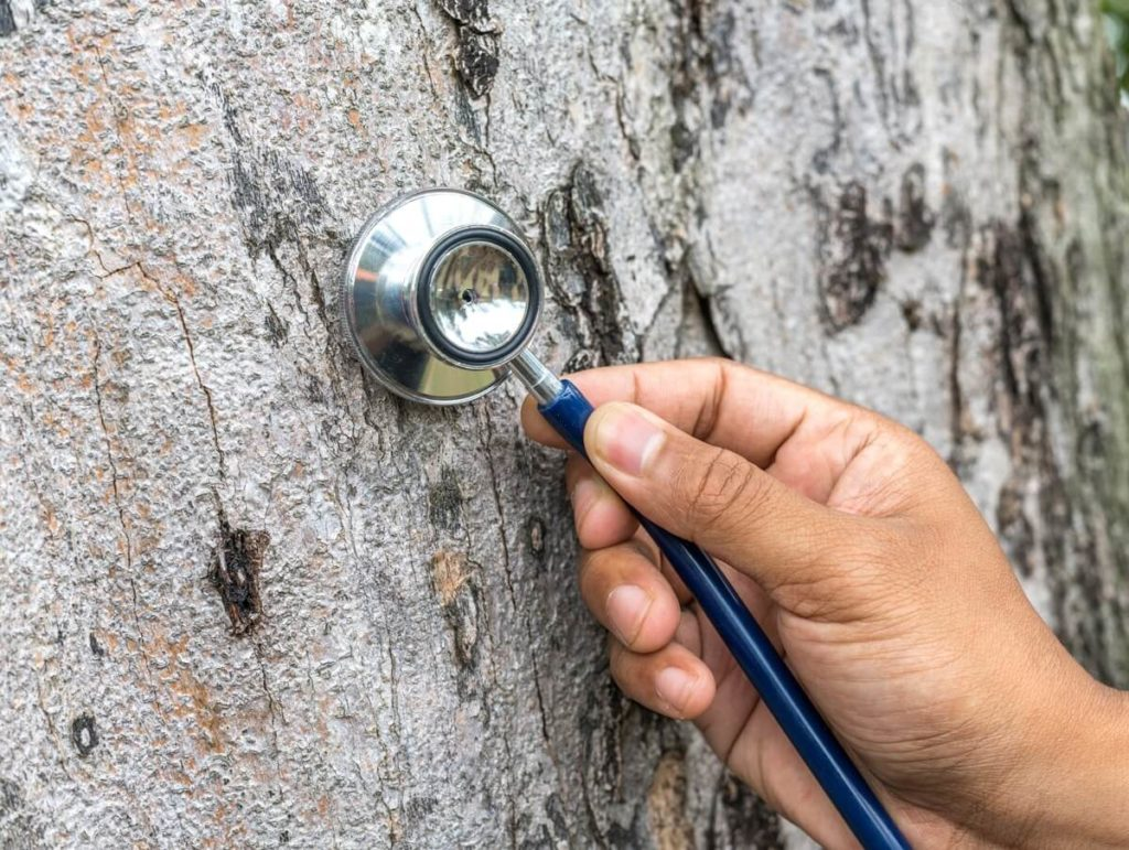 Tree Assessments-Aventura FL Tree Trimming and Stump Grinding Services-We Offer Tree Trimming Services, Tree Removal, Tree Pruning, Tree Cutting, Residential and Commercial Tree Trimming Services, Storm Damage, Emergency Tree Removal, Land Clearing, Tree Companies, Tree Care Service, Stump Grinding, and we're the Best Tree Trimming Company Near You Guaranteed!