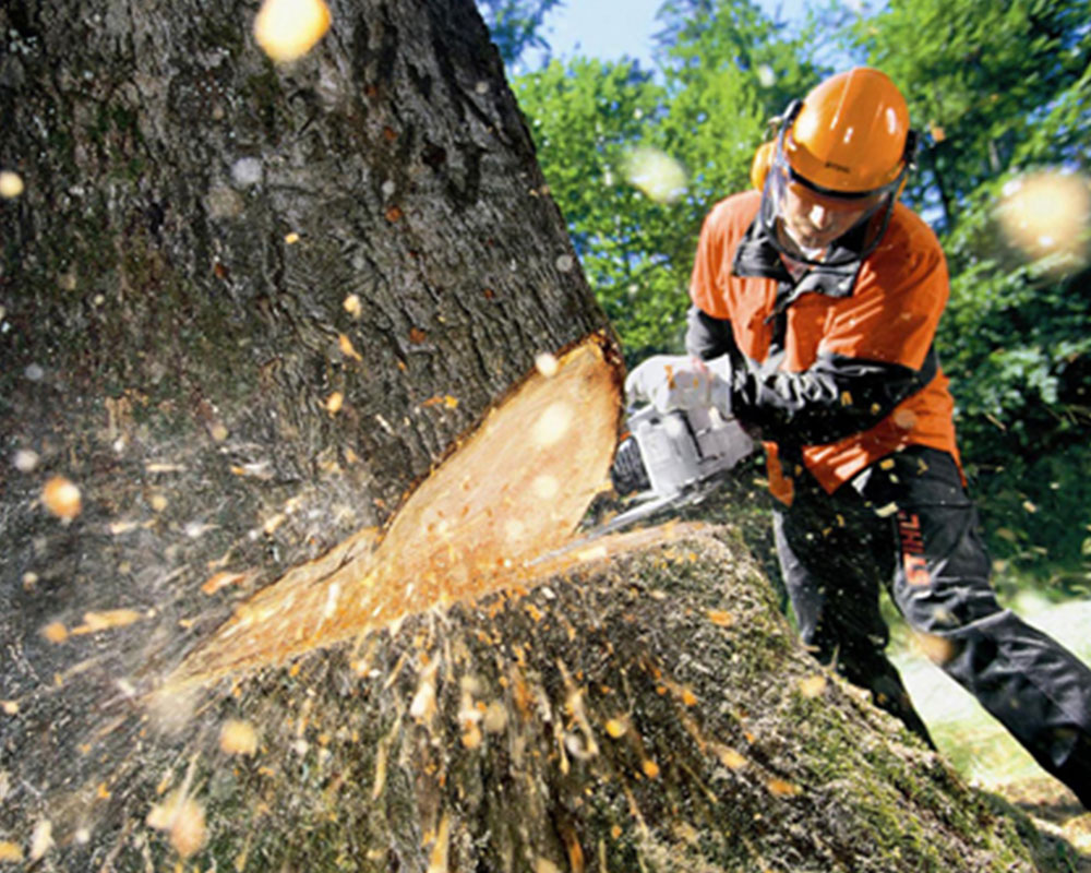 Tree Cutting-Aventura FL Tree Trimming and Stump Grinding Services-We Offer Tree Trimming Services, Tree Removal, Tree Pruning, Tree Cutting, Residential and Commercial Tree Trimming Services, Storm Damage, Emergency Tree Removal, Land Clearing, Tree Companies, Tree Care Service, Stump Grinding, and we're the Best Tree Trimming Company Near You Guaranteed!