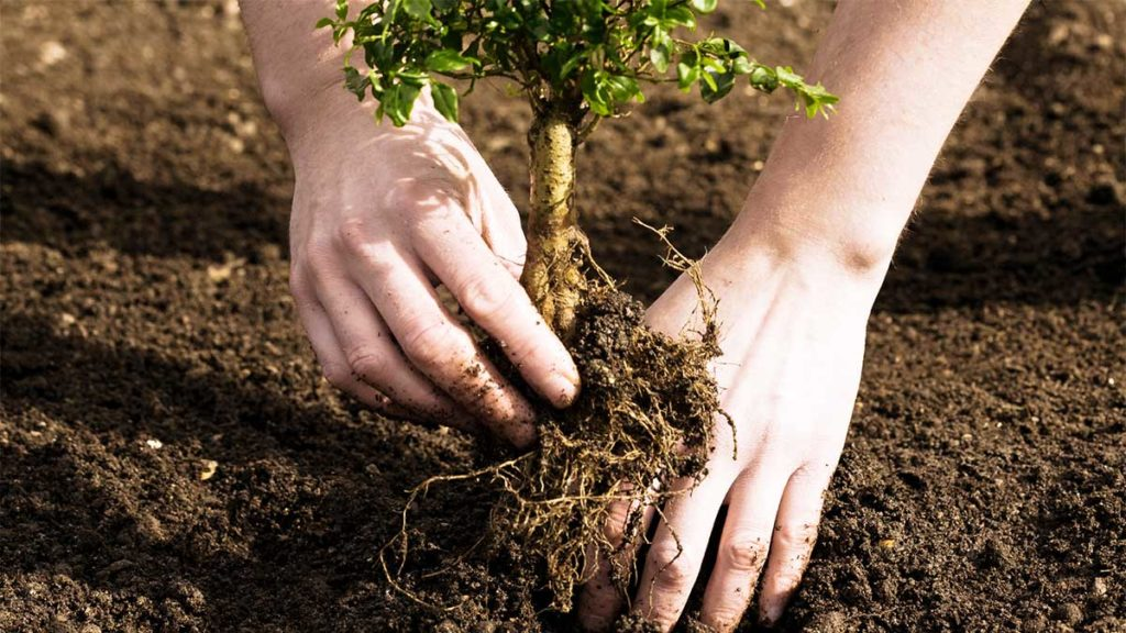 Tree Planting-Aventura FL Tree Trimming and Stump Grinding Services-We Offer Tree Trimming Services, Tree Removal, Tree Pruning, Tree Cutting, Residential and Commercial Tree Trimming Services, Storm Damage, Emergency Tree Removal, Land Clearing, Tree Companies, Tree Care Service, Stump Grinding, and we're the Best Tree Trimming Company Near You Guaranteed!