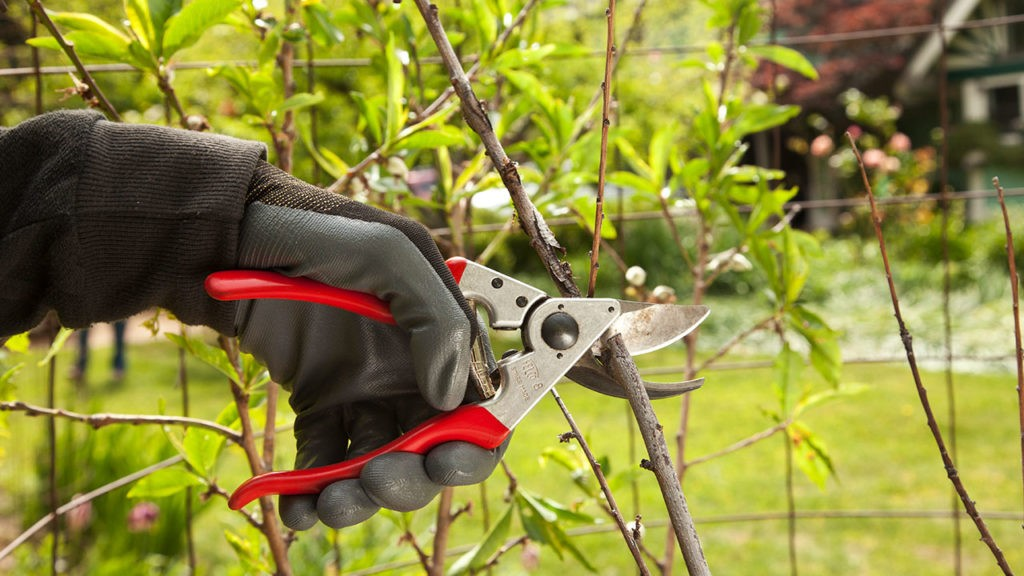 Tree Pruning-Aventura FL Tree Trimming and Stump Grinding Services-We Offer Tree Trimming Services, Tree Removal, Tree Pruning, Tree Cutting, Residential and Commercial Tree Trimming Services, Storm Damage, Emergency Tree Removal, Land Clearing, Tree Companies, Tree Care Service, Stump Grinding, and we're the Best Tree Trimming Company Near You Guaranteed!