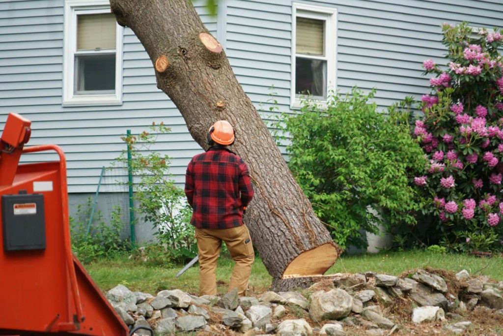 Tree Removal-Aventura FL Tree Trimming and Stump Grinding Services-We Offer Tree Trimming Services, Tree Removal, Tree Pruning, Tree Cutting, Residential and Commercial Tree Trimming Services, Storm Damage, Emergency Tree Removal, Land Clearing, Tree Companies, Tree Care Service, Stump Grinding, and we're the Best Tree Trimming Company Near You Guaranteed!