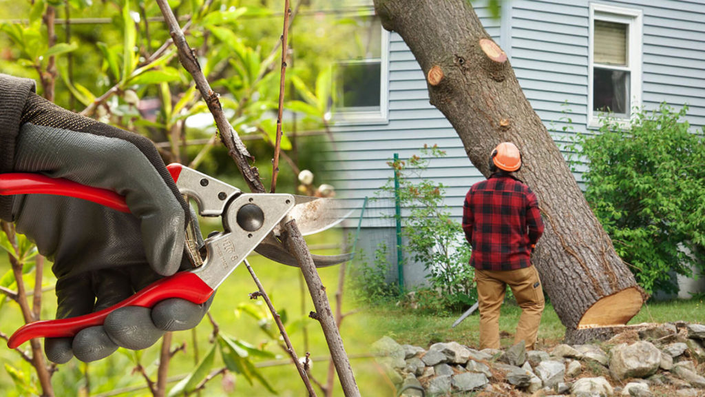 Tree pruning & tree removal-Aventura FL Tree Trimming and Stump Grinding Services-We Offer Tree Trimming Services, Tree Removal, Tree Pruning, Tree Cutting, Residential and Commercial Tree Trimming Services, Storm Damage, Emergency Tree Removal, Land Clearing, Tree Companies, Tree Care Service, Stump Grinding, and we're the Best Tree Trimming Company Near You Guaranteed!